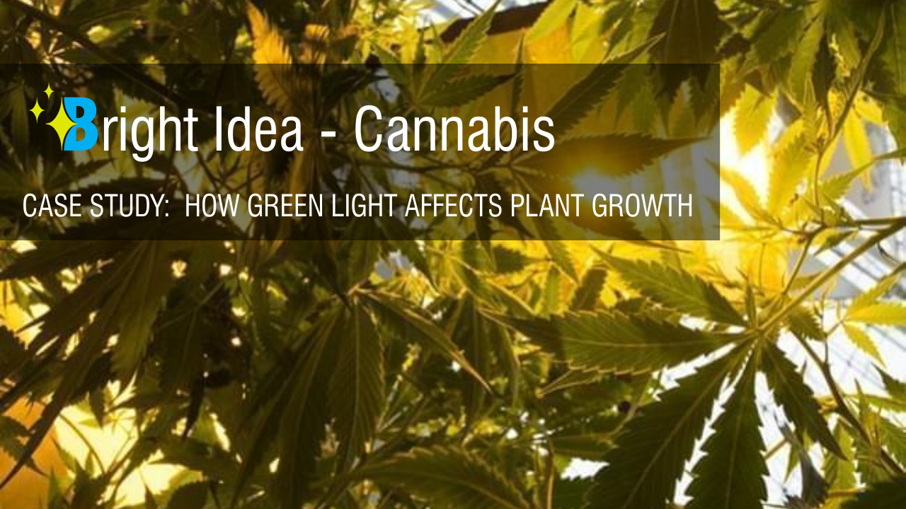 How Green Light Affects Plant Growth - Brightway LED Lighting